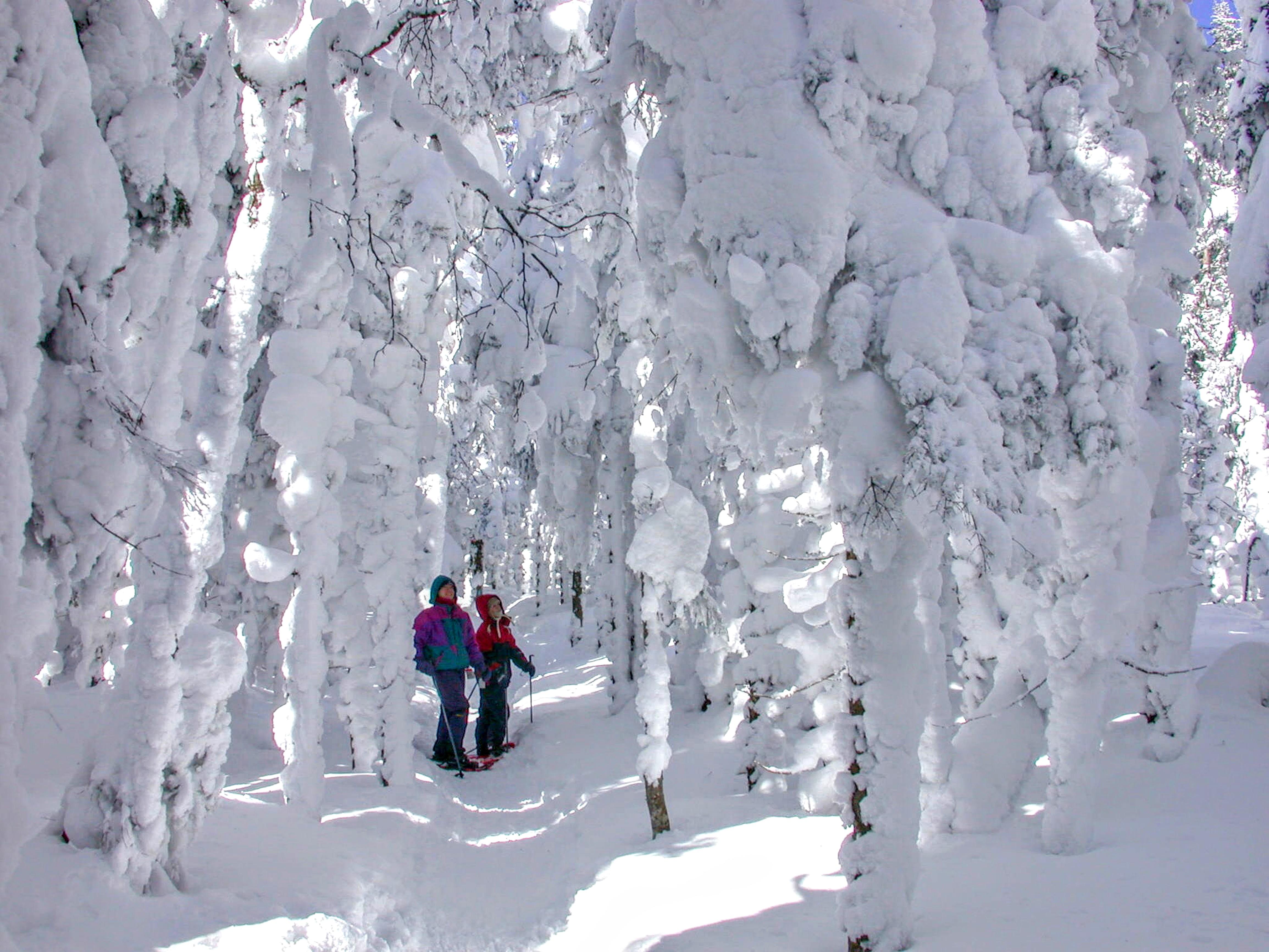 6 randonn es parmi les fant mes de neige espaces - La ren des neige ...