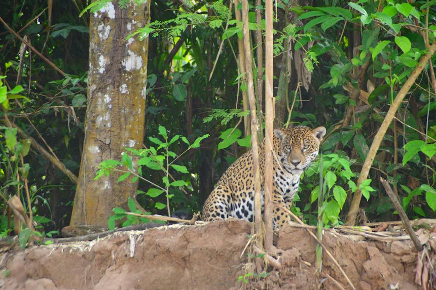 © Madidi Jungle Ecolodges